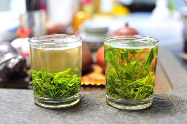崂山茶 春茶