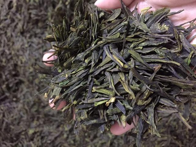 崂山茶春茶