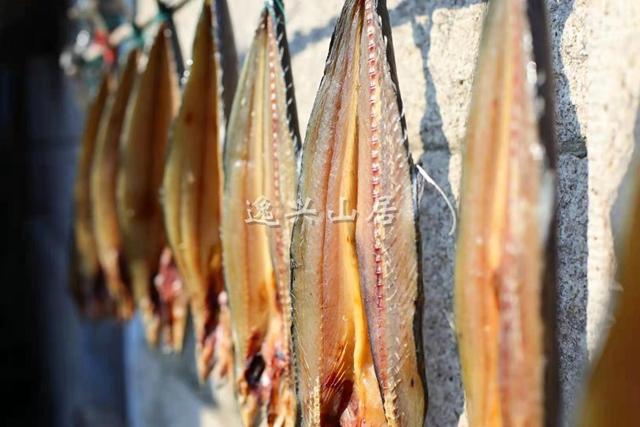 崂山天晒鲅鱼